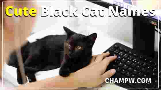 Cute Black Cat Names