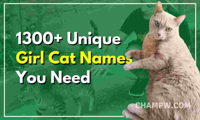 1300+ Unique Girl Cat Names You Need