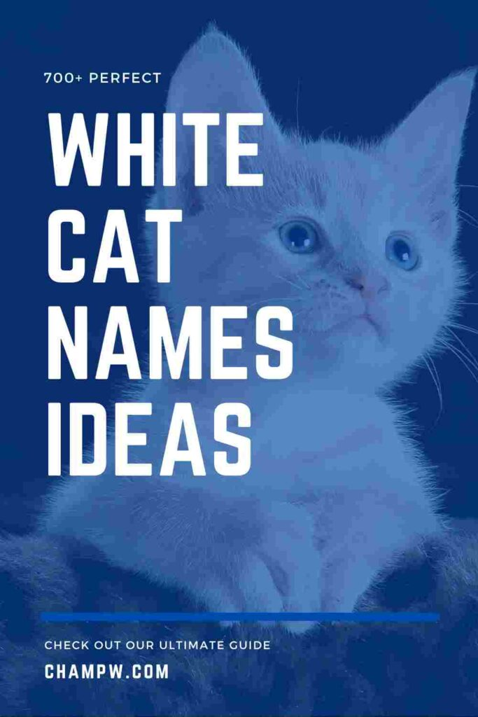 700+ Perfect White Cat Names For Your Flurry Friend