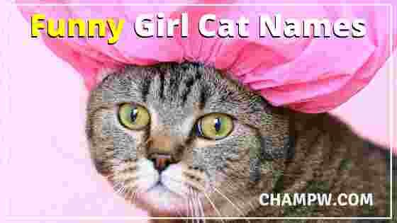 Funny Girl Cat Names