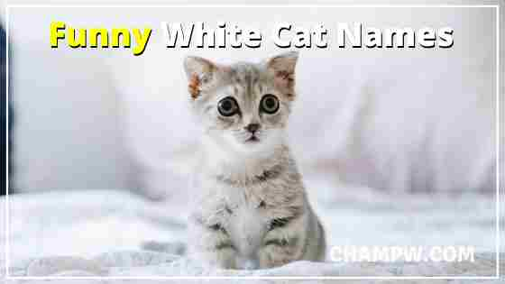 Funny White Cat Names