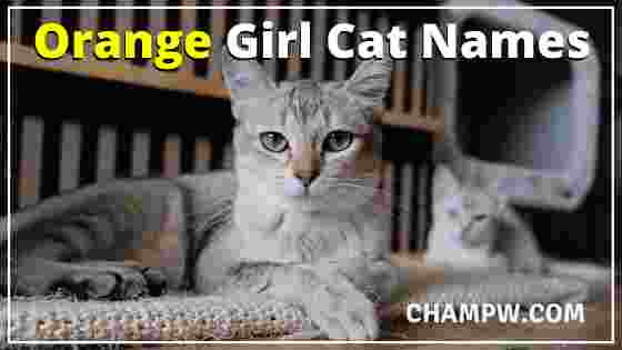 Orange Girl Cat Names